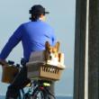 三浦海岸に自転車で