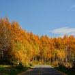 尊い秋の輝き その1・・・と、この冬の一大決意!!
