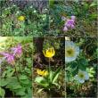 カナディアンロッキー花の旅(6)