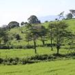 長野県佐久市の東端にある佐久荒船高原の草原は、真夏の風景になりました