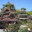 バラの都苑(浜松)