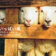 『羊いっぱい展』とか映画とかのお知らせ。