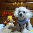 老犬ラスさん どこ見て吠える? ( ・◇・)?(・◇・ )