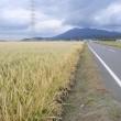 飼料用米の稲刈り作業はこれから。