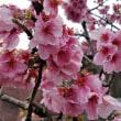 春は駆け足で・・・・・
