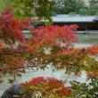 「紅葉」/檜町公園