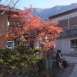 早期に国立公園となった霊山にある寺周辺の紅葉