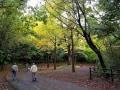 11/13探鳥記録写真-2(瀬板の森の小鳥たち:リュウキュウサンショウクイ、アオジ、ジョウビタキ、キンクロハジロほか)