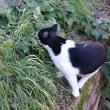 本日 『猫の日』