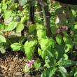 今朝のボーダー花壇
