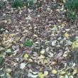 落葉の道散策
