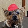 ガチャで一年生帽子紅組