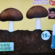 日本一の椎茸