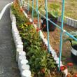 チュニジア共和国駐日大使蓮池公園植樹