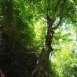 2018年5月25日(金) 金剛山の、緑の初夏をたっぷり楽しむ!