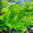 京都への思い-京都市左京区:鞍馬寺