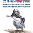 第四回東京野鳥写真クラブ写真展開催中・・・(五日目)