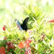 長野県東御市の北東部にある池の平湿原では、ミヤマカラスアゲハにも出会いました