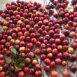 無農薬で作ったプラムがメチャ甘い‼️ そして大豊作‼️
