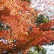 喜多院の紅葉・山門からどろうぼう橋・喜多院公園へ