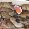 久しぶりにキモいいね♪数量限定!北海道神恵内「カワハギ(ウマヅラハギ)」のお造り!!刺身と手作り干物の専門店「発寒かねしげ鮮魚店」。
