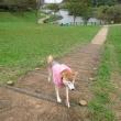 中央公園昼散歩