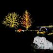 まっ白ふわもこニホンスピッツのオフ会 ライトアップ編(森林公園こうよう見ナイト編)