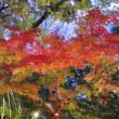 紅葉見ナイト(東松山森林公園)