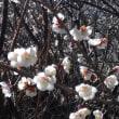 春は近い?