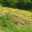 9月の信州上田・・・稲倉の棚田は・・・稲刈りがはじまっていた