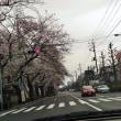 自然に感謝 今年の桜🌸4月