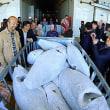 青島海産物取引センターについてLuhai Fengが署名   中国
