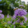 2018 ミツバチたちの受難の時代  《福岡市東区筥崎宮花庭園》