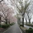 フォト花日記『 雪の桜 02 』zqw1002