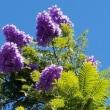 5月はハワイも花の季節
