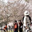 成田さくらの山2