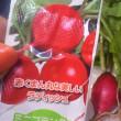収穫!! 赤くまんまるな美しいラディッシュ  〜わたしの菜園日記より〜