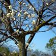 東那須野公園に行ってきました
