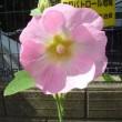 平和への希い1206 広島・長崎の悲劇