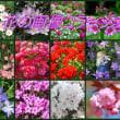 花の画像 コラージュ
