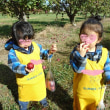 りんご狩り@Daycare
