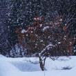 初冬の風景