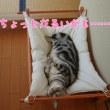 猫をダメにするハンモック