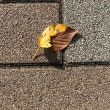 今朝の秋でした。