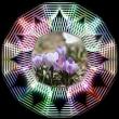 春の花を・・・