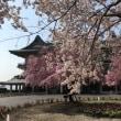 びわ湖大津館の桜♪