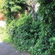 チュー太郎の庭仕事