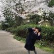 桜満開、おめでとう!ぴっかぴかの一年生
