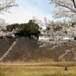 桜、ひらひら