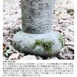 今回は、墓碑の前に献納された石製の瓶(いわゆる花瓶)の紹介です